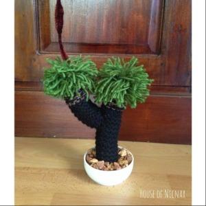 cactus d
